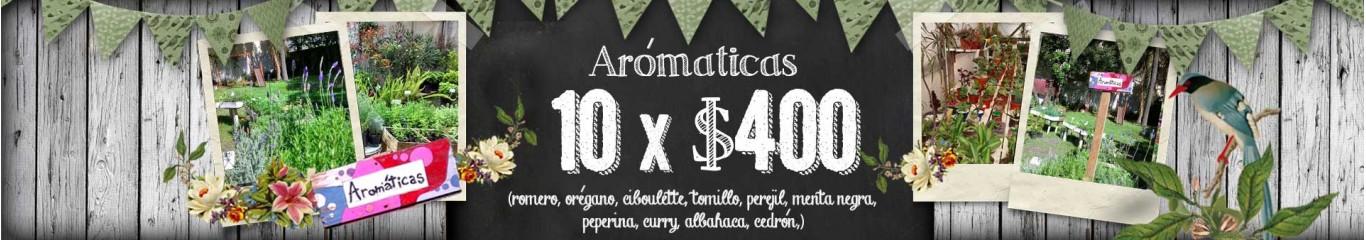 aromaticas