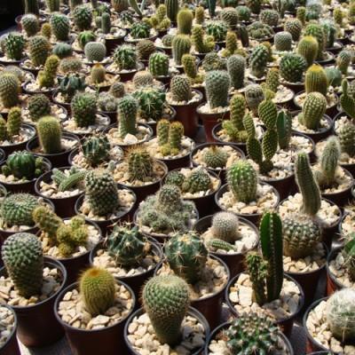 5 x Cactus N9