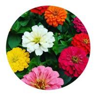 Zinnia Flor de Papel