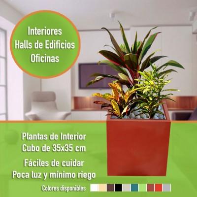 Mix Plantas de Interior + Cubo 35x35
